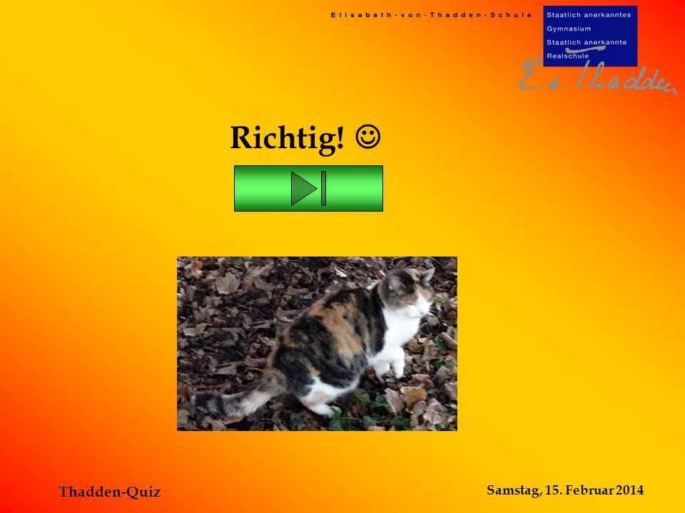 Samstag, 15. Februar 2014 Thadden-Quiz Wir haben eine Schulkatze! Falsch!