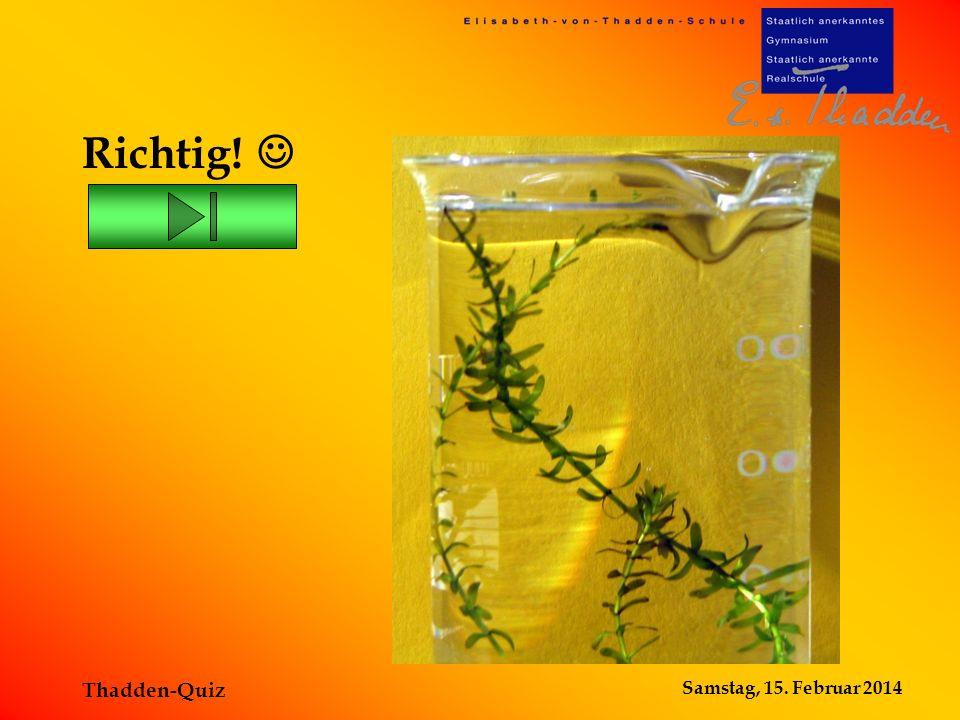Samstag, 15. Februar 2014 Thadden-Quiz Die Wasserpest ist eine Pflanze! Falsch!