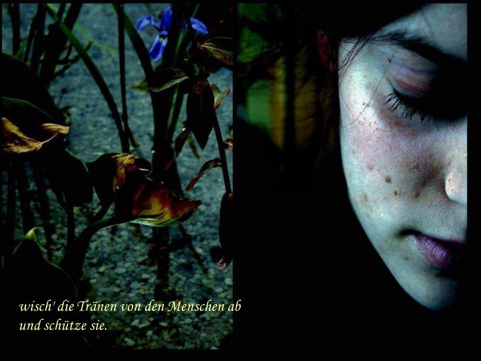 Trag mich fort, Schmetterling, schenk uns Frieden vor dem Morgengrauen,