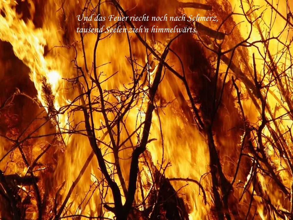 Und das Feuer riecht noch nach Schmerz, tausend Seelen zieh n himmelwärts.