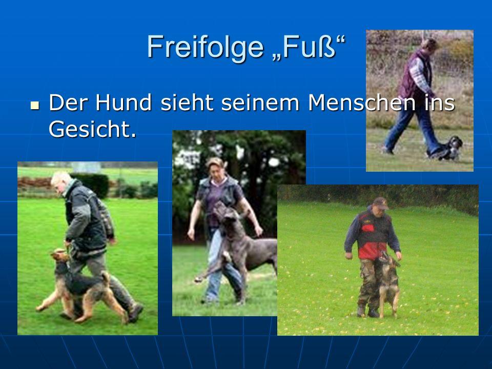 Freifolge Fuß Der Hund sieht seinem Menschen ins Gesicht. Der Hund sieht seinem Menschen ins Gesicht.