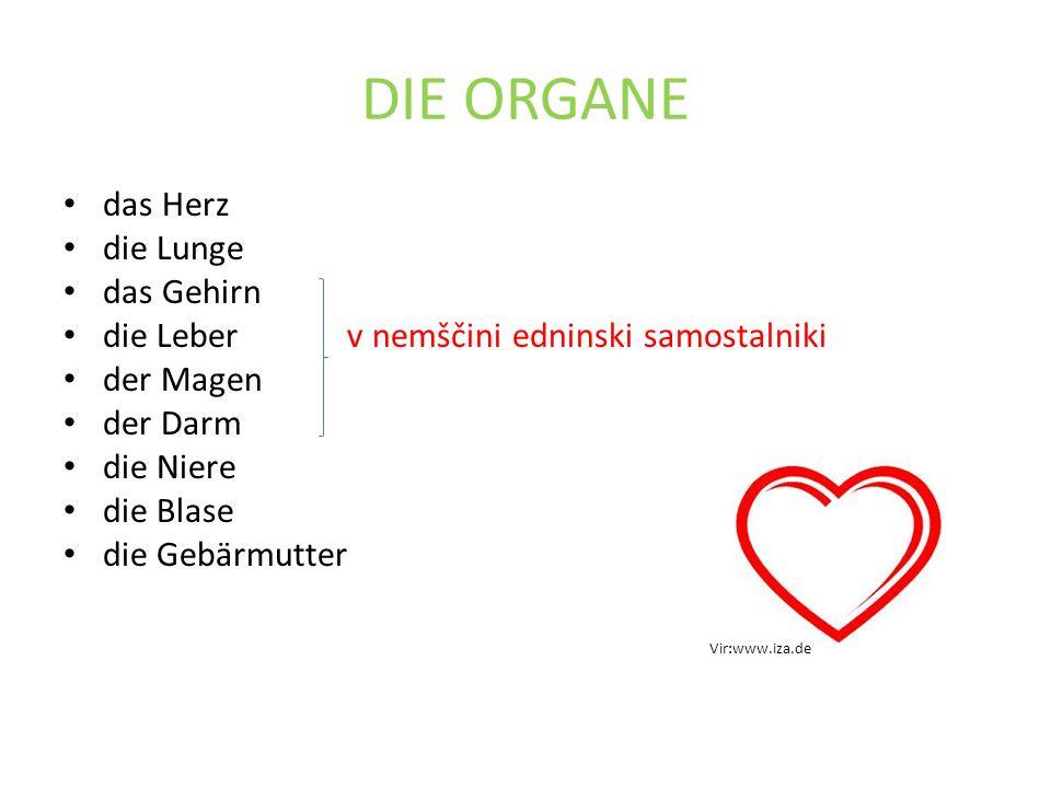 DIE ORGANE das Herz die Lunge das Gehirn die Leber v nemščini edninski samostalniki der Magen der Darm die Niere die Blase die Gebärmutter Vir:www.iza.de