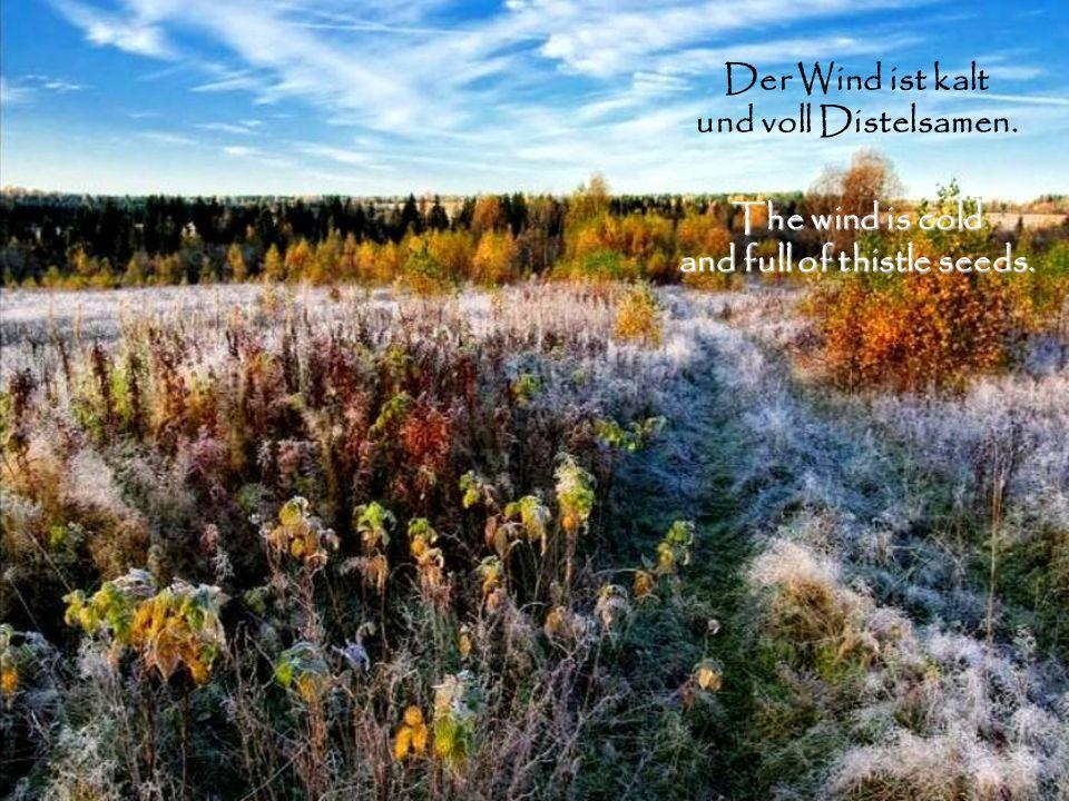 Der Wind ist kalt und voll Distelsamen. The wind is cold and full of thistle seeds.