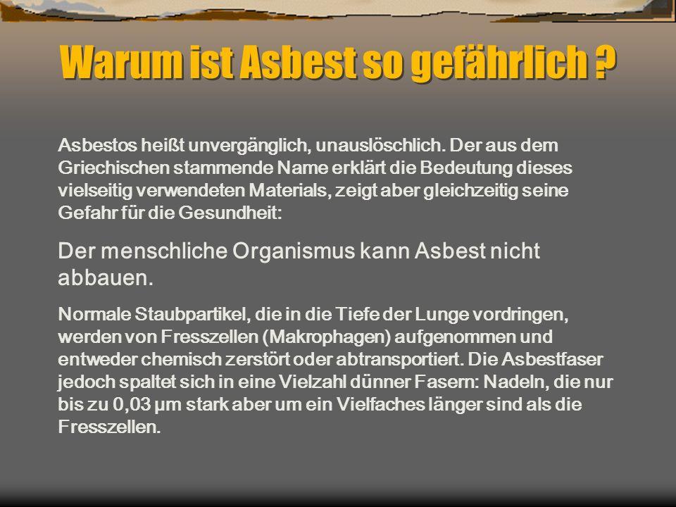 Warum ist Asbest so gefährlich ? Asbestos heißt unvergänglich, unauslöschlich. Der aus dem Griechischen stammende Name erklärt die Bedeutung dieses vi