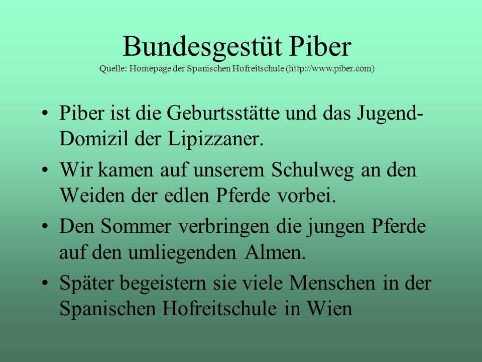 Piber ist die Geburtsstätte und das Jugend- Domizil der Lipizzaner. Wir kamen auf unserem Schulweg an den Weiden der edlen Pferde vorbei. Den Sommer v