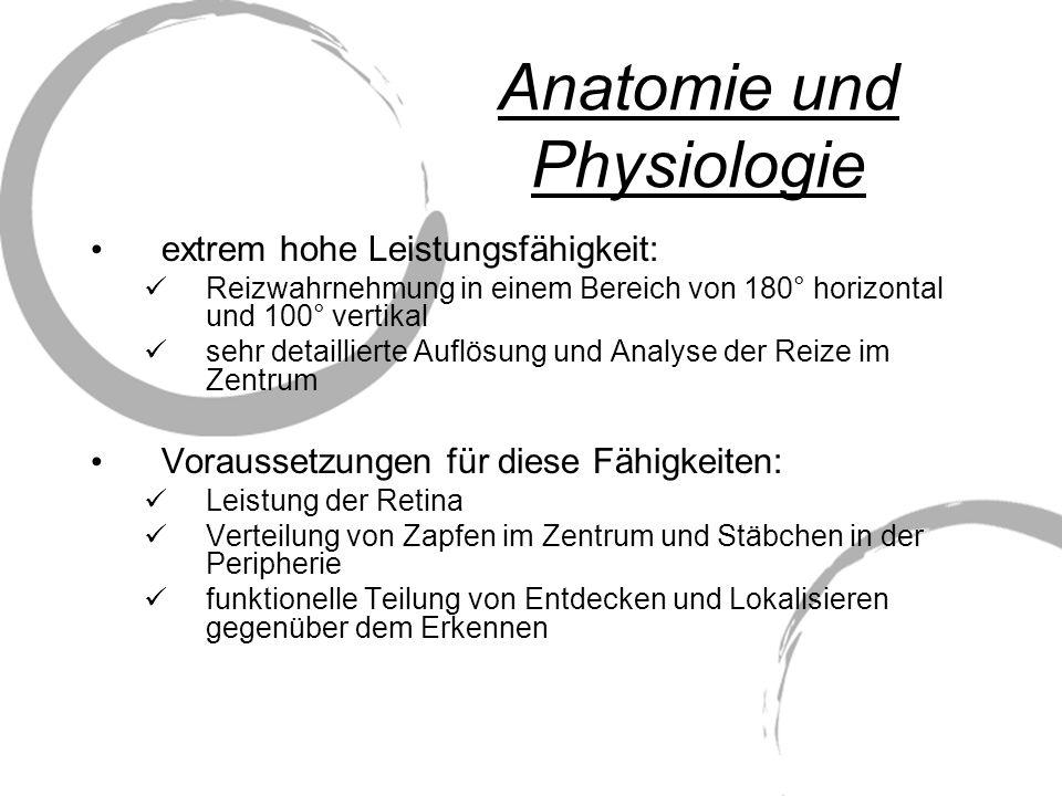 Anatomie und Physiologie extrem hohe Leistungsfähigkeit: Reizwahrnehmung in einem Bereich von 180° horizontal und 100° vertikal sehr detaillierte Aufl