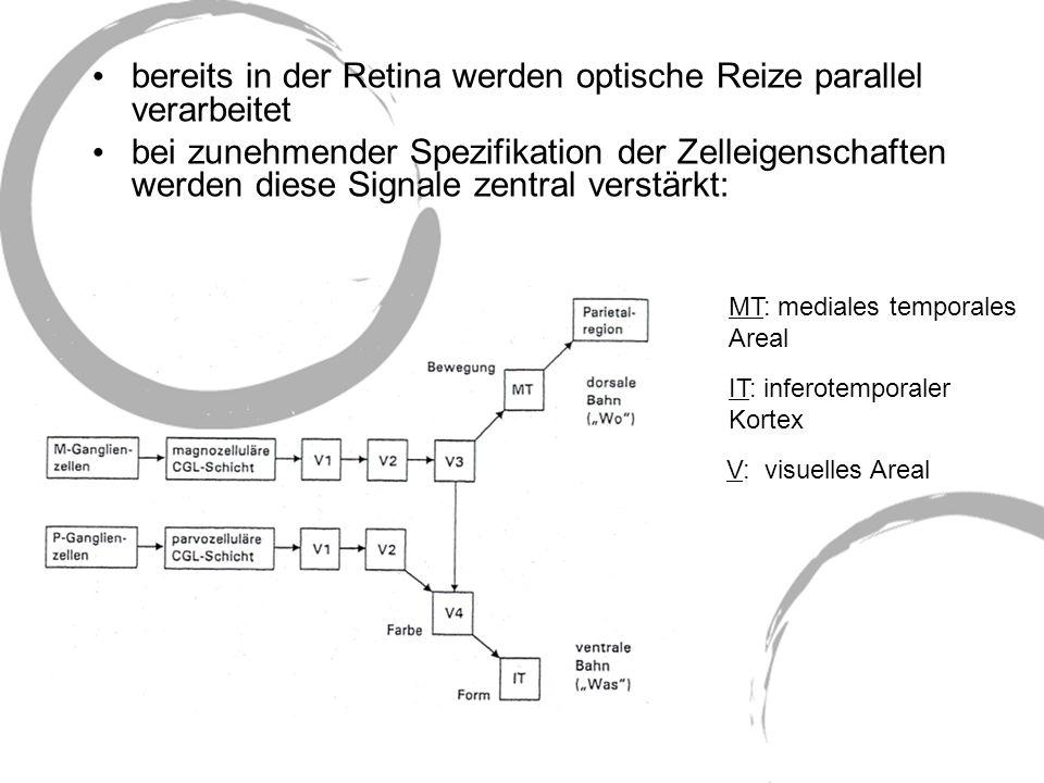 M-System: magnozellulär große rezeptive Felder geringe räumliche Auflösung hohe zeitliche Auflösung farbenblind kontrastempfindliche Tiefen- und Bewegungswahrnehmung projizieren in Felder globaler Raumwahrnehmung (V3 und V5) P-System: parvozellulär kleine rezeptive Felder hohe räumliche Auflösung geringe zeitliche Auflösung farbempfindlich hohe Detailauflösung mit geringer Kontrastempfindlichkeit projizieren in Felder der Farb- und Formwahrnehmung (V4 und IT) Beide Systeme finden sich in extrastriären Verarbeitungsrouten: M-System in dorsaler Bahn (okzipitoparietal) P-System in ventraler Bahn (okzipitotemporal)