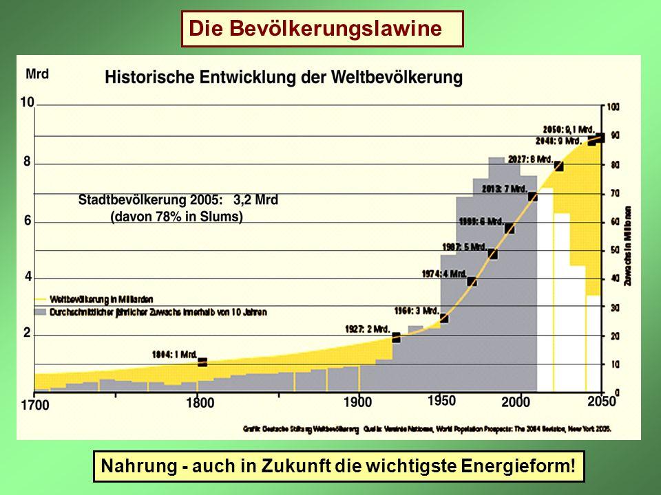 Die Bevölkerungslawine Nahrung - auch in Zukunft die wichtigste Energieform!