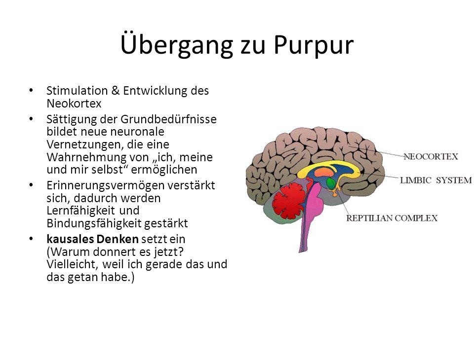 Übergang zu Purpur Stimulation & Entwicklung des Neokortex Sättigung der Grundbedürfnisse bildet neue neuronale Vernetzungen, die eine Wahrnehmung von ich, meine und mir selbst ermöglichen Erinnerungsvermögen verstärkt sich, dadurch werden Lernfähigkeit und Bindungsfähigkeit gestärkt kausales Denken setzt ein (Warum donnert es jetzt.