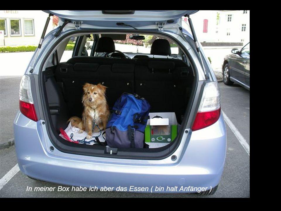 Jeder hat seine Hundebox im Auto