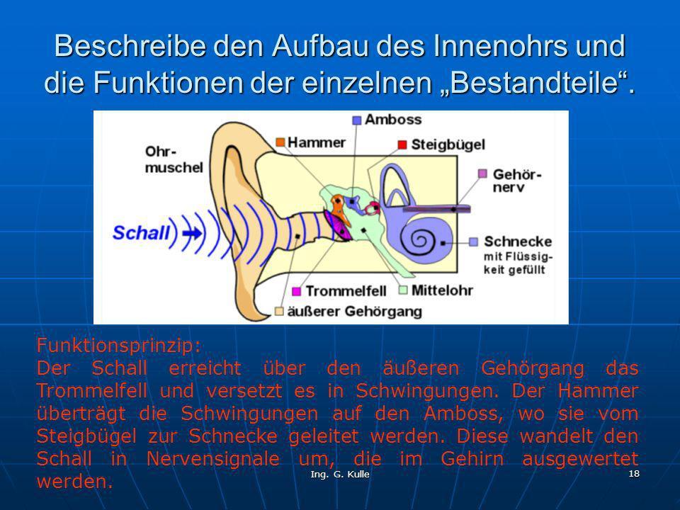 Ing. G. Kulle 18 Beschreibe den Aufbau des Innenohrs und die Funktionen der einzelnen Bestandteile. Funktionsprinzip: Der Schall erreicht über den äuß