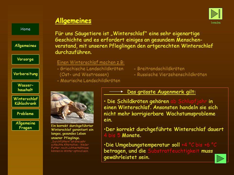 beenden Home Probleme Vorsorge Allgemeines Vorbereitung Wasser- haushalt Winterschlaf Kühlschrank Allgemeines Das grösste Augenmerk gilt: Die Schildkröten gehören ab Schlupfjahr in einen Winterschlaf.