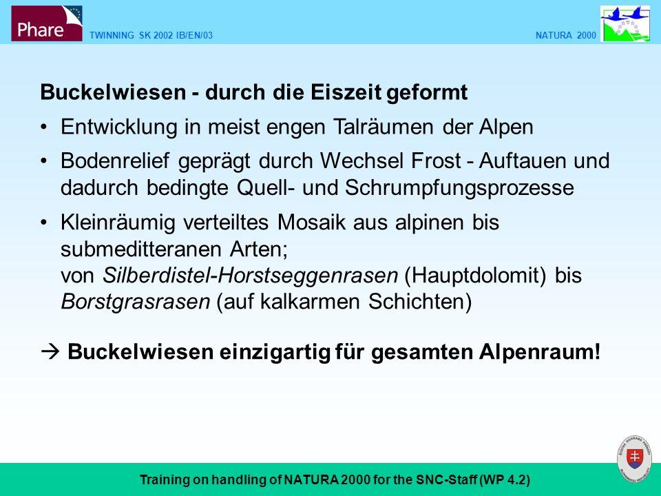 TWINNING SK 2002 IB/EN/03 NATURA 2000 Training on handling of NATURA 2000 for the SNC-Staff (WP 4.2) Buckelwiesen - durch die Eiszeit geformt Entwicklung in meist engen Talräumen der Alpen Bodenrelief geprägt durch Wechsel Frost - Auftauen und dadurch bedingte Quell- und Schrumpfungsprozesse Kleinräumig verteiltes Mosaik aus alpinen bis submeditteranen Arten; von Silberdistel-Horstseggenrasen (Hauptdolomit) bis Borstgrasrasen (auf kalkarmen Schichten) Buckelwiesen einzigartig für gesamten Alpenraum!