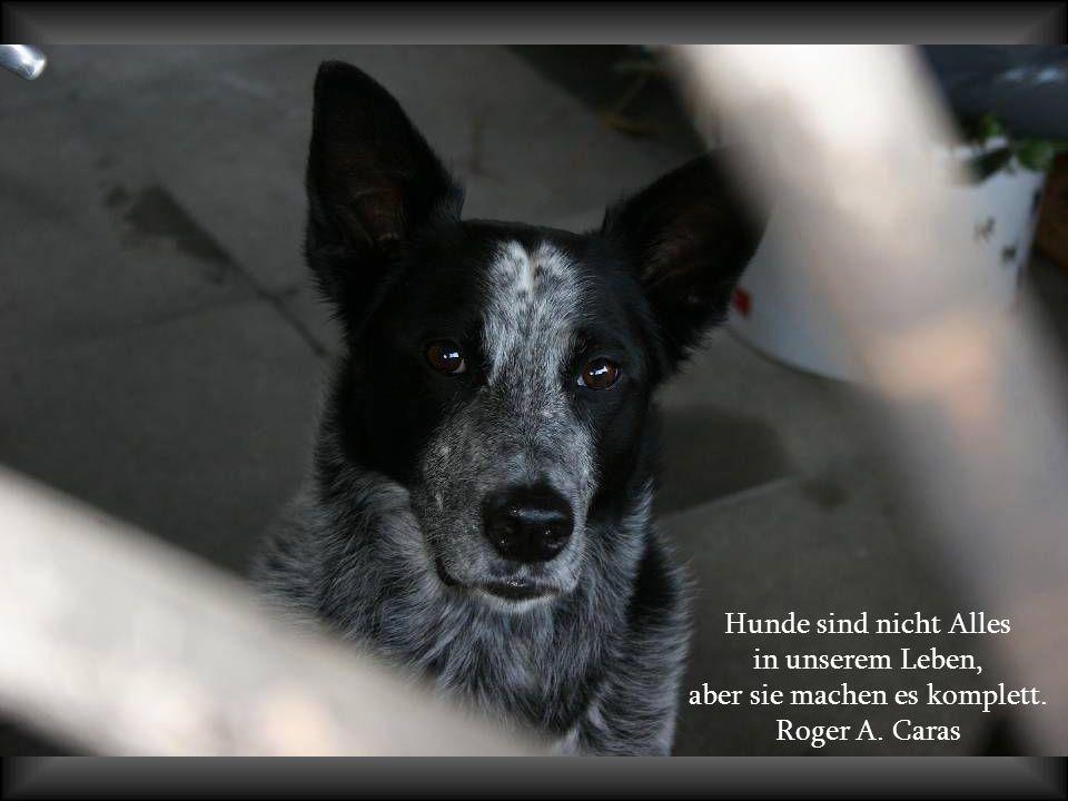 Hunde lieben ihre Freunde und beißen ihre Feinde; im Gegensatz zu Menschen, die dazu tendieren Liebe und Hass zu vermischen. Sigmund Freud