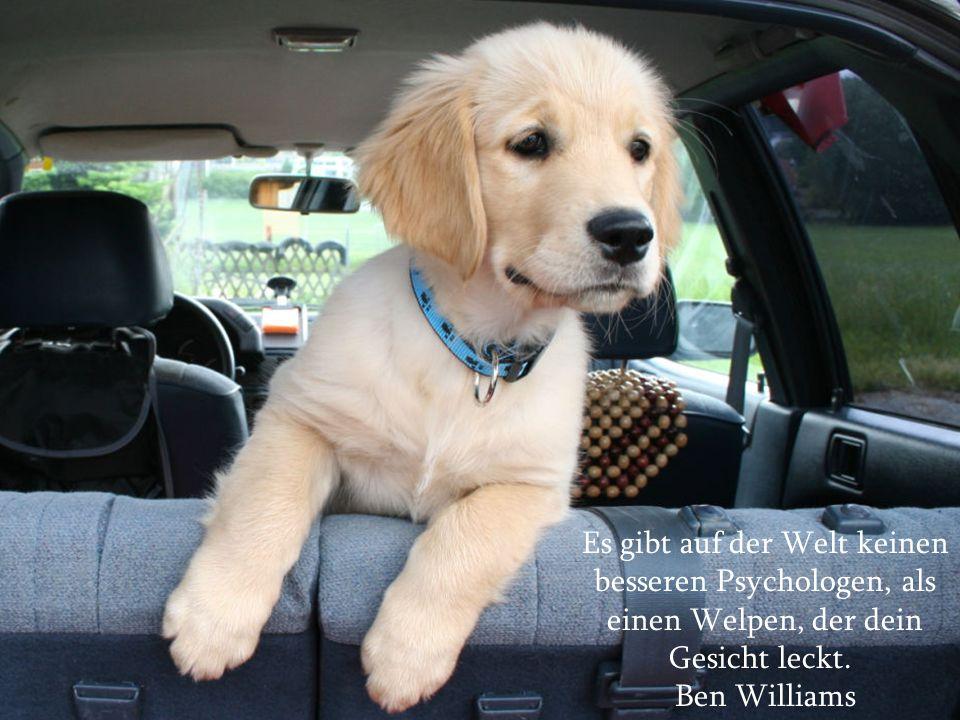Über Hunde und Menschen Mit den besten Wünschen für das Jahr 2011!