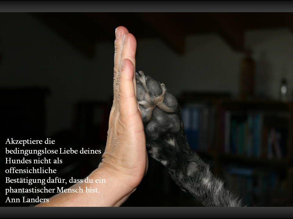 Die Treue eines Hundes ist ein kostbares Geschenk, das nicht minder bindende moralische Verpflichtungen auferlegt, als die Freundschaft zu einem Mensc