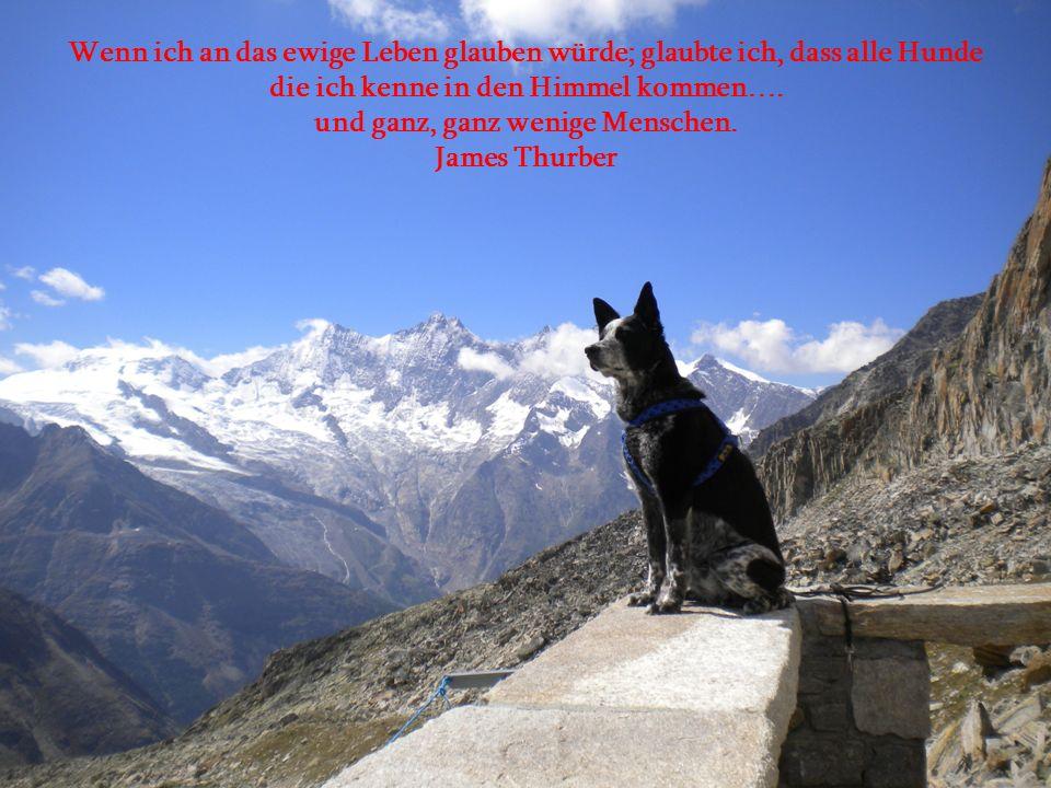 Akzeptiere die bedingungslose Liebe deines Hundes nicht als offensichtliche Bestätigung dafür, dass du ein phantastischer Mensch bist. Ann Landers