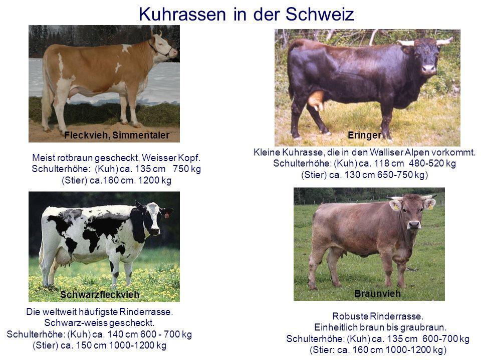 Die mittlere Milchleistung einer guten Kuh beträgt in der Laktationsperiode durchschnittlich 25 kg pro Tag. Dies ergibt eine Jahresmilchleistung von 7