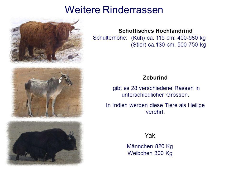 Kuhrassen in der Schweiz Fleckvieh, Simmentaler Meist rotbraun gescheckt. Weisser Kopf. Schulterhöhe: (Kuh) ca. 135 cm 750 kg (Stier) ca.160 cm. 1200