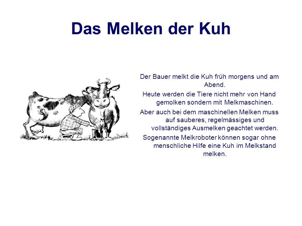 Weitere Rinderrassen Schottisches Hochlandrind Schulterhöhe: (Kuh) ca. 115 cm. 400-580 kg (Stier) ca.130 cm. 500-750 kg Zeburind gibt es 28 verschiede