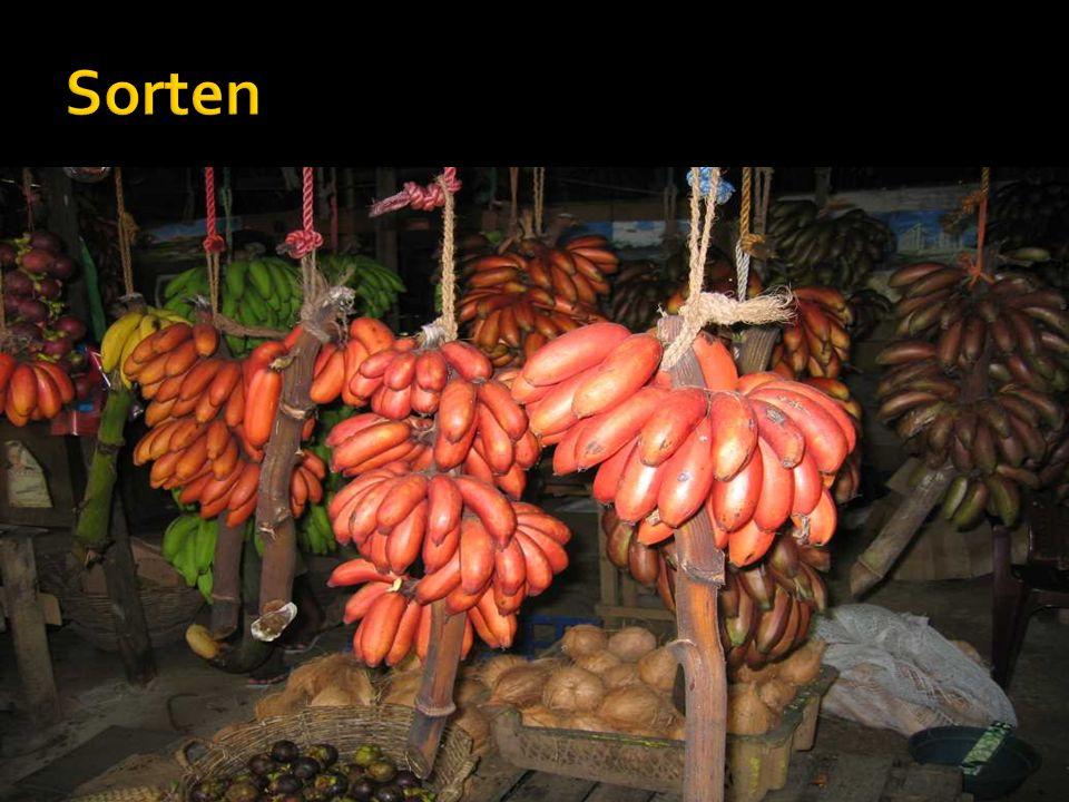 Kochbanane Textilbanane Obstbanane Apfelbanane Bananen mit Kern Banane Mas Banane Kanarie Rote Banane