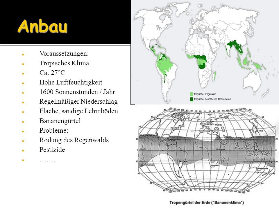 Voraussetzungen: Tropisches Klima Ca. 27°C Hohe Luftfeuchtigkeit 1600 Sonnenstunden / Jahr Regelmäßiger Niederschlag Flache, sandige Lehmböden Bananen