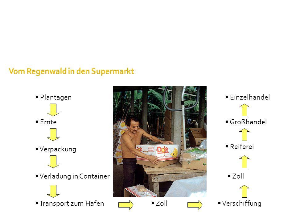 Plantagen Vom Regenwald in den Supermarkt Ernte Verpackung Verschiffung Reiferei Einzelhandel Transport zum Hafen Zoll Verladung in Container Zoll Gro