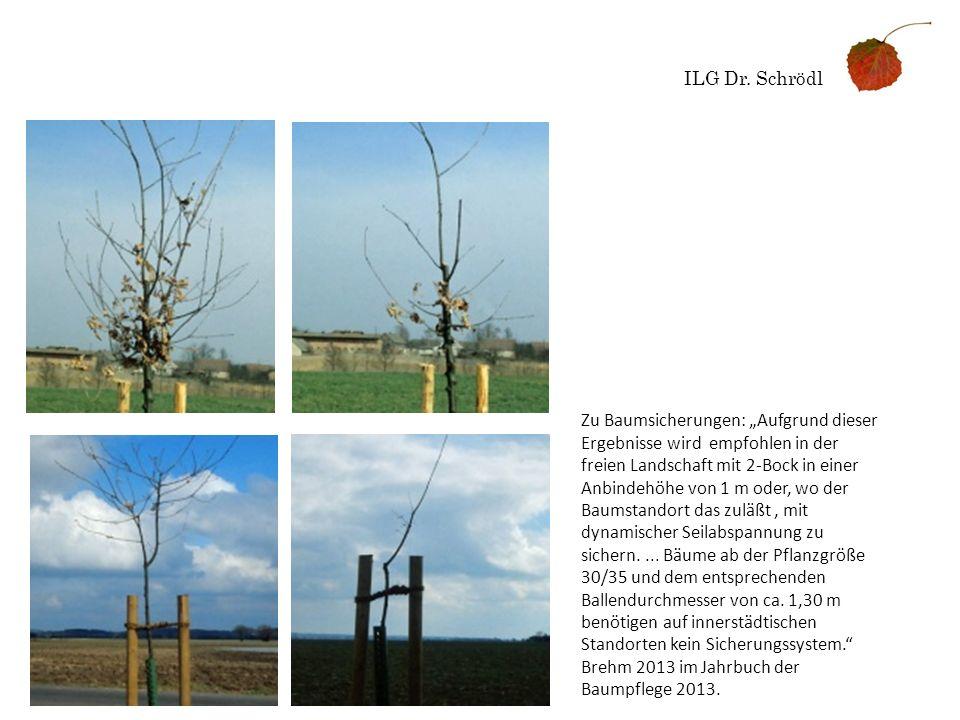 ILG Dr. Schrödl Zu Baumsicherungen: Aufgrund dieser Ergebnisse wird empfohlen in der freien Landschaft mit 2-Bock in einer Anbindehöhe von 1 m oder, w