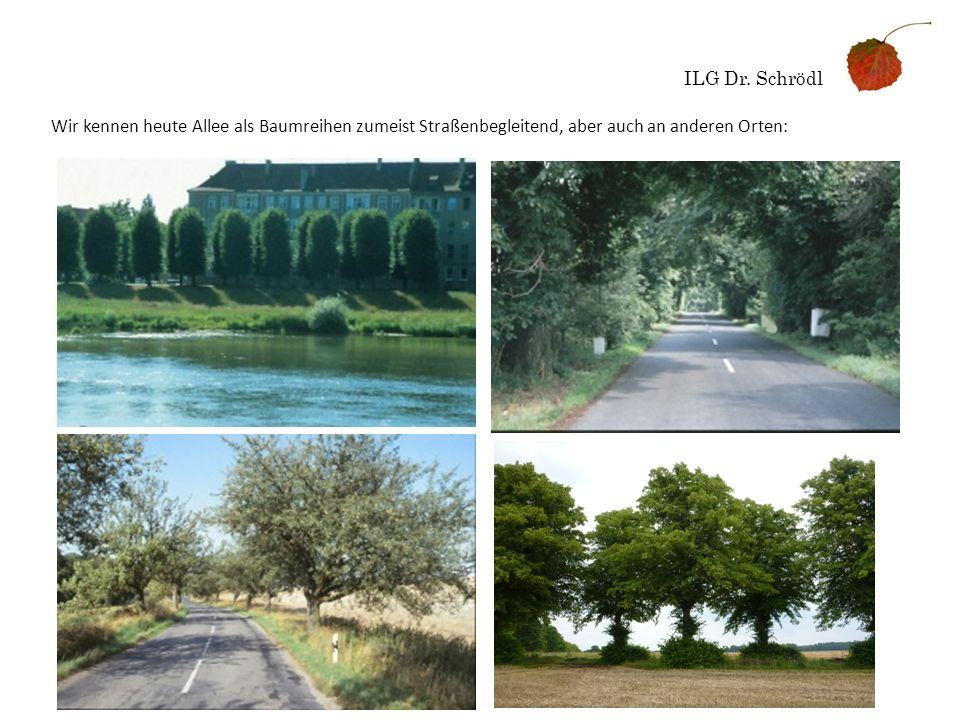 ILG Dr. Schrödl Wir kennen heute Allee als Baumreihen zumeist Straßenbegleitend, aber auch an anderen Orten: