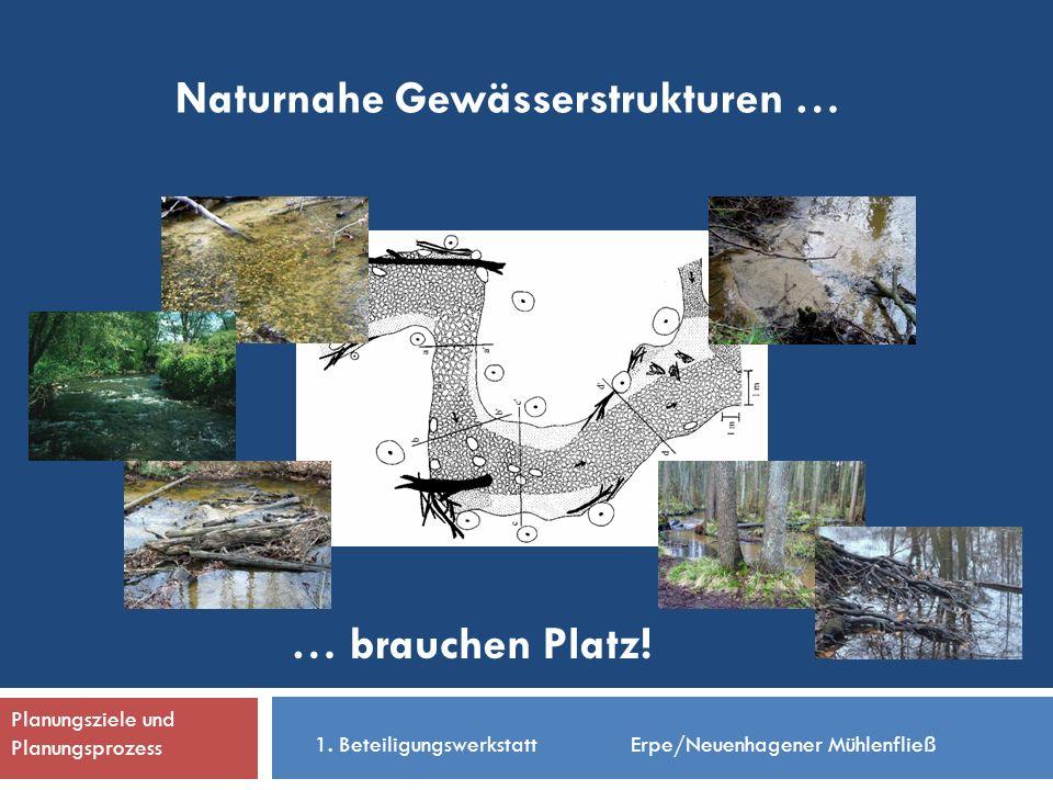 Naturnahe Gewässerstrukturen … … brauchen Platz. 1.