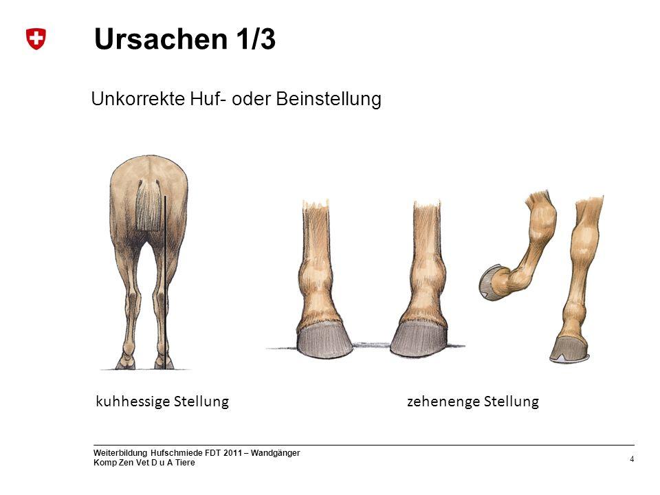 4 Weiterbildung Hufschmiede FDT 2011 – Wandgänger Komp Zen Vet D u A Tiere Ursachen 1/3 kuhhessige Stellungzehenenge Stellung Unkorrekte Huf- oder Beinstellung