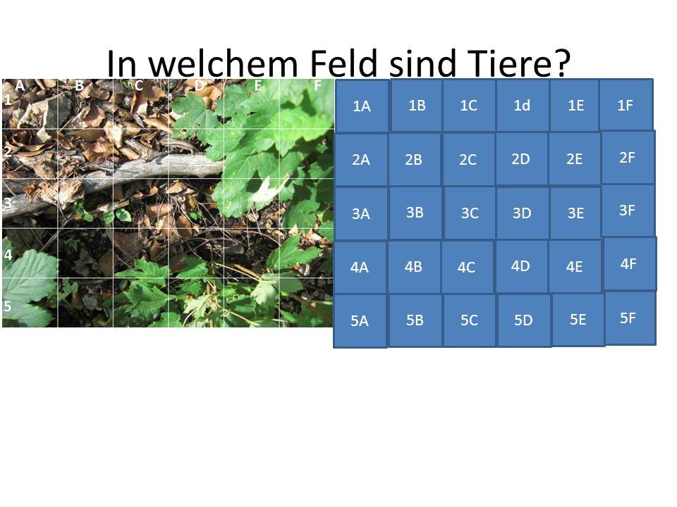 In welchem Feld sind Tiere? 1B1d1E 2C 2D2E 1F 2B 2A 3A 3B 3C 2F 4A 4B 4C 3D 3E 5A 5B 4D 4E 3F 5F 5C 5D 5E 4F 1C 1A