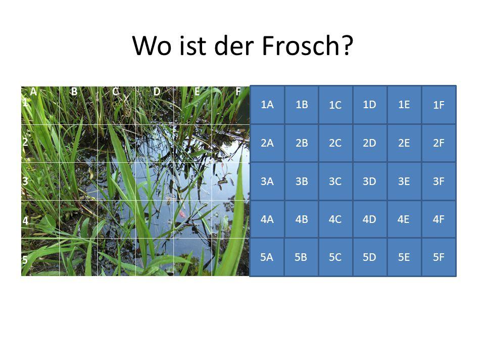 Wo ist der Frosch 1A1B 1C 1D1E 1F 2A2B 2C 2D 2E2F 3A 3B 3C3D3E3F 4A4B 4C4D 4E4F 5A 5B5C5D 5E 5F