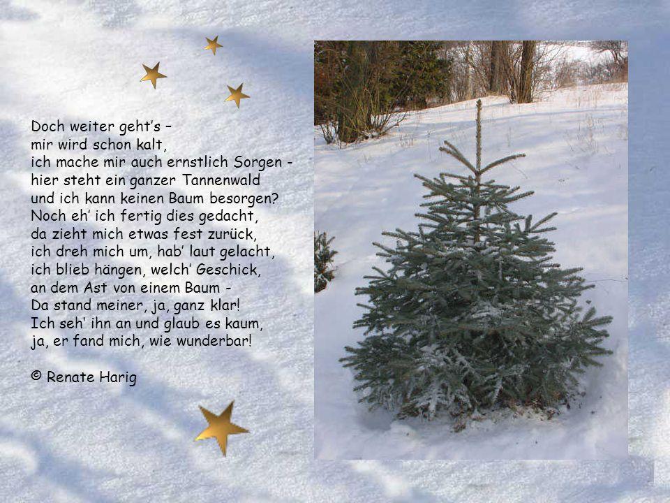 Hallo, da bin ich! Wie jedes Jahr, gehe ich los, zu suchen meinen schönsten Baum. Die Freude darauf ist gar groß, doch wo bist du, der meinem Traum ei