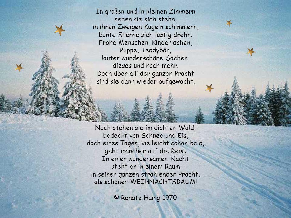 Winternacht Kalt und eisig weht der Wind, Schnee glitzert im Sternenschein. Flocken wirbeln ganz geschwind, die Welt, sie ist so weiß, so rein. Latern