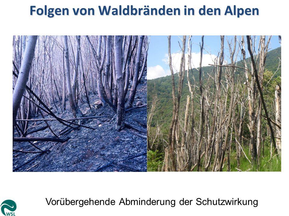 Folgen von Waldbränden in den Alpen Vorübergehende Abminderung der Schutzwirkung