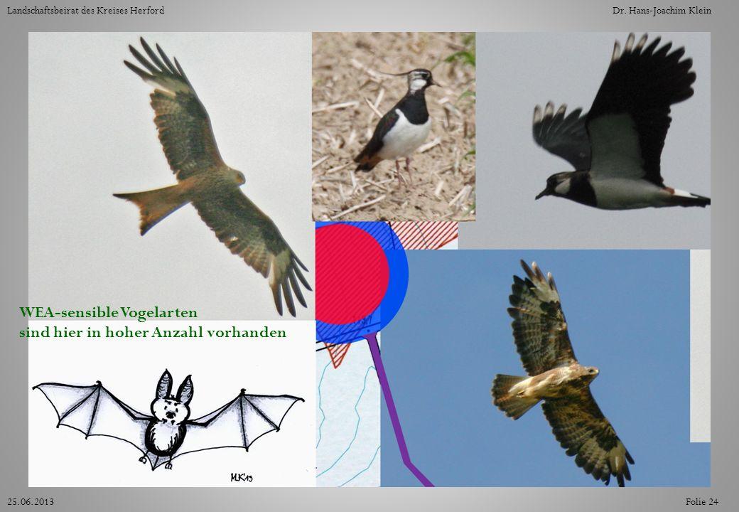 Folie 2425.06.2013 Landschaftsbeirat des Kreises HerfordDr. Hans-Joachim Klein WEA-sensible Vogelarten sind hier in hoher Anzahl vorhanden