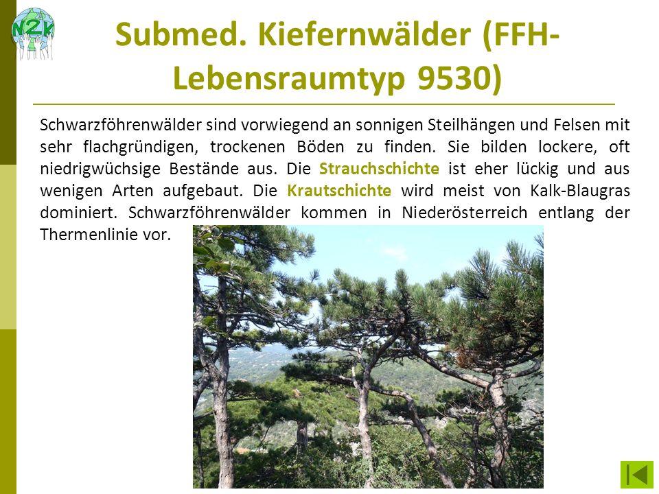 Submed. Kiefernwälder (FFH- Lebensraumtyp 9530) Schwarzföhrenwälder sind vorwiegend an sonnigen Steilhängen und Felsen mit sehr flachgründigen, trocke