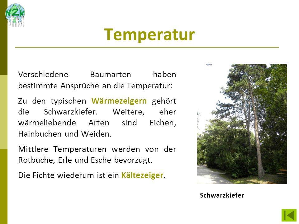 Temperatur Verschiedene Baumarten haben bestimmte Ansprüche an die Temperatur: Zu den typischen Wärmezeigern gehört die Schwarzkiefer. Weitere, eher w