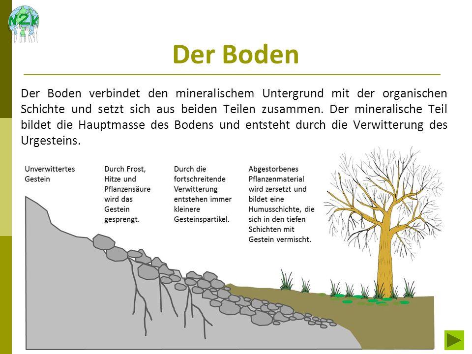 Der Boden Der Boden verbindet den mineralischem Untergrund mit der organischen Schichte und setzt sich aus beiden Teilen zusammen. Der mineralische Te
