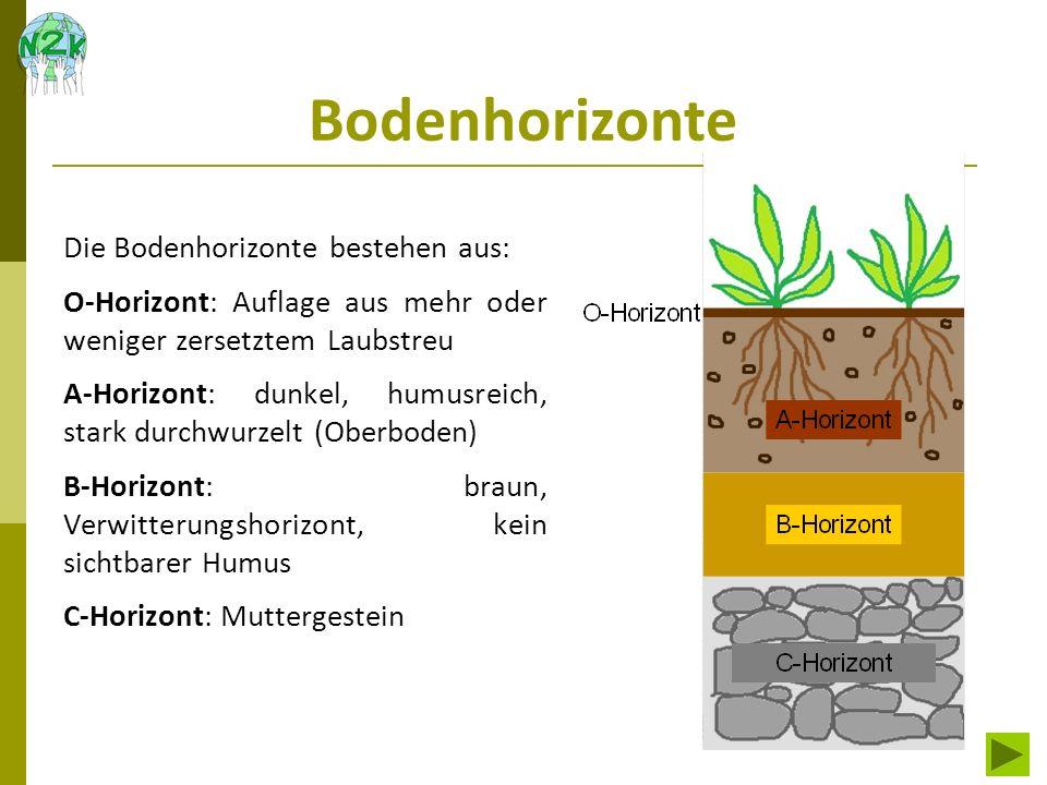 Bodenhorizonte Die Bodenhorizonte bestehen aus: O-Horizont: Auflage aus mehr oder weniger zersetztem Laubstreu A-Horizont: dunkel, humusreich, stark d