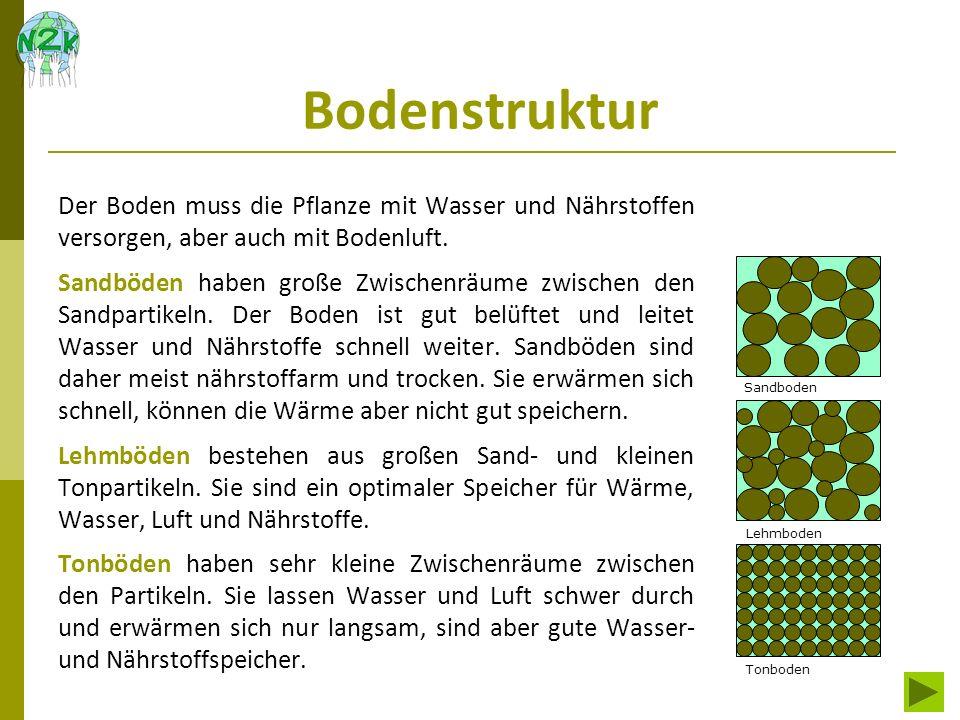 Bodenchemie Wichtige Pflanzen-Nährstoffe im Boden sind: Kalzium, Kalium, Phosphor, Magnesium und Stickstoff Zu den Spurenelemente zählen: Eisen, Kupfer, Zink, Bor und Molybdän Die meisten der Nährstoffe sind im Muttergestein oder an Ton- und Humus- Teilchen gebunden.