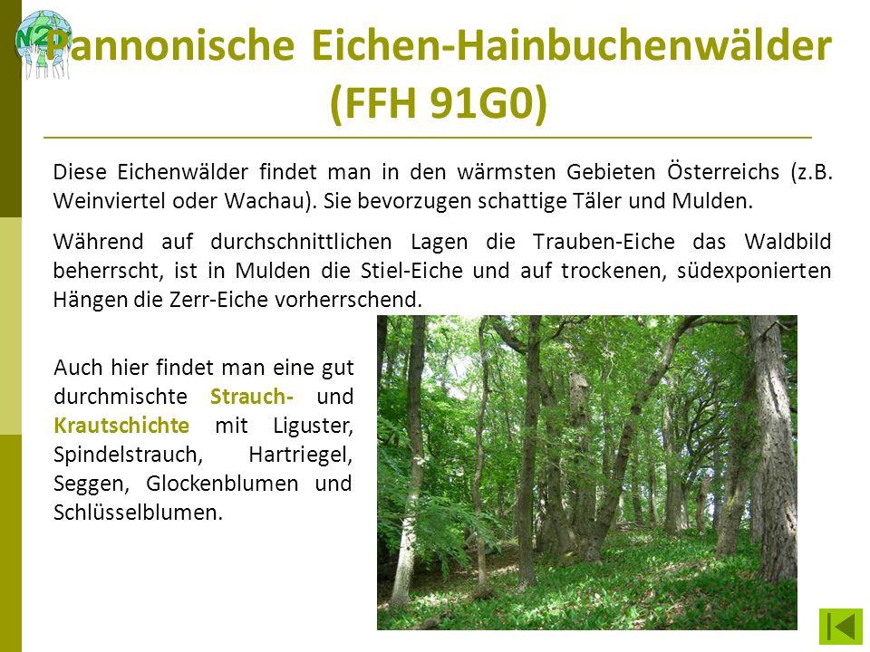 Pannonische Eichen-Hainbuchenwälder (FFH 91G0) Diese Eichenwälder findet man in den wärmsten Gebieten Österreichs (z.B. Weinviertel oder Wachau). Sie