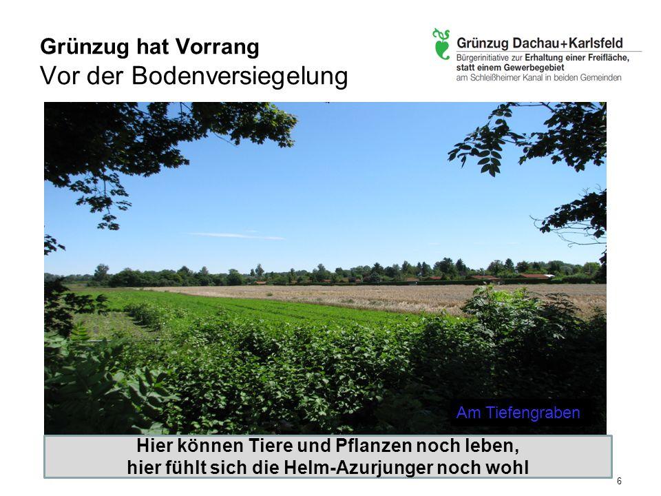 Helmazurjungfer Die Wasserläufe sind durch europäische FFH-Richtlinie geschützt Bayernweit größtes Vorkommen der seltenen, vom Aussterben bedrohten Libellenart Wir befürchten eine massive Beeinträchtigung des Lebensraums durch das Zusammentreffen mehrerer Bauvorhaben –Gewerbegebiet Karlsfeld –Gewerbegebiet Dachau mit Anbindung von Karlsfeld –Dachauer Nord-Ost-Umgehung 7