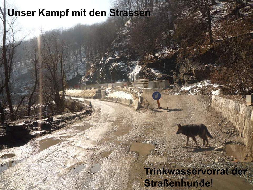 Unser Kampf mit den Strassen Trinkwasservorrat der Straßenhunde!