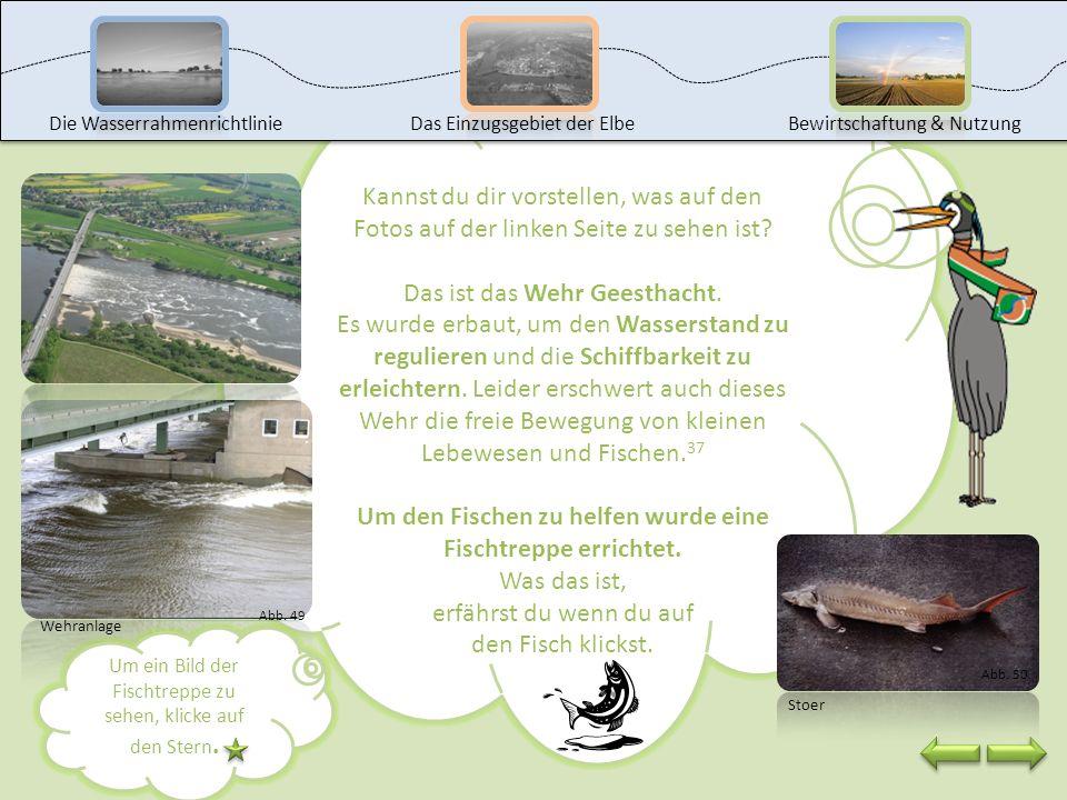 Doch der Bau dieser Stauanlagen hat auch Nachteile für die Gewässer. So wird zum Beispiel der natürliche (Ab-)Fluss des Gewässers unterbrochen oder da