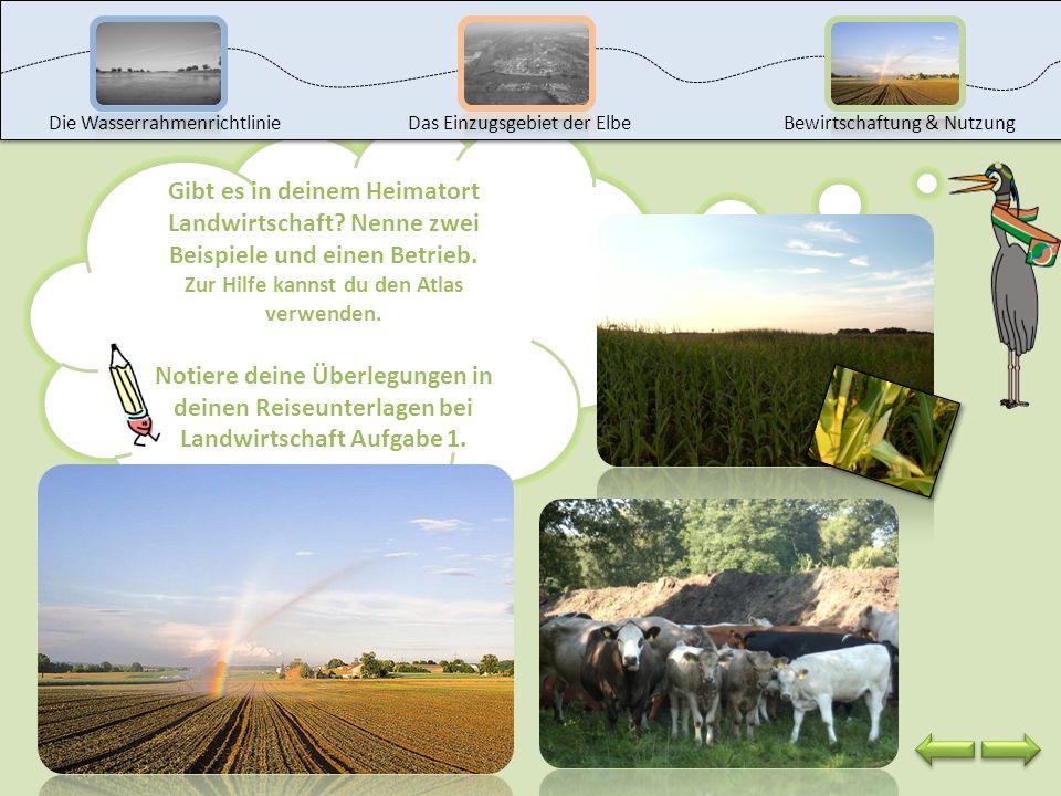 Wie wird wohl das Wasser für die Landwirtschaft genutzt? Oh Verzeihung, weißt du eigentlich was Landwirtschaft bedeutet? Die Landwirtschaft beschreibt