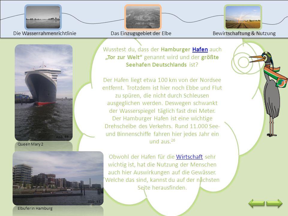 Moin moin und Willkommen im Hamburger Hafen. Die Elbe wird nicht nur als Lebensraum für mich und andere Tiere und Pflanzen, sondern auch für den Verke