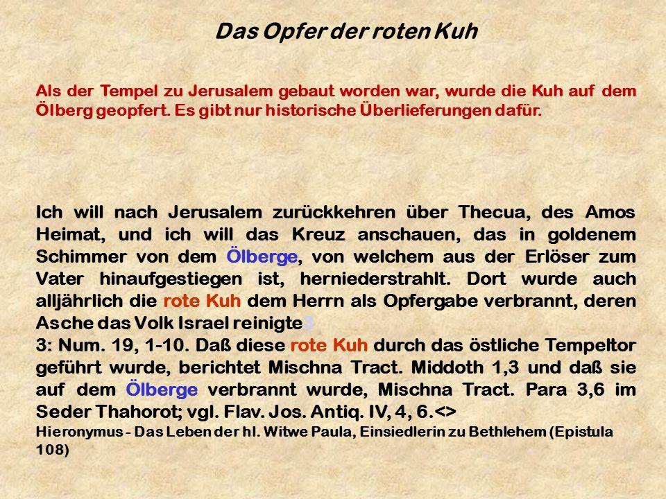 Das Opfer der roten Kuh Ich will nach Jerusalem zurückkehren über Thecua, des Amos Heimat, und ich will das Kreuz anschauen, das in goldenem Schimmer
