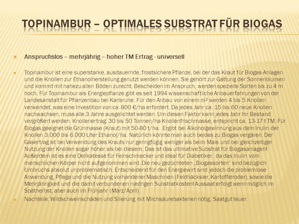 Anspruchslos – mehrjährig – hoher TM Ertrag - universell Topinambur ist eine superstarke, ausdauernde, frostsichere Pflanze, bei der das Kraut für Bio